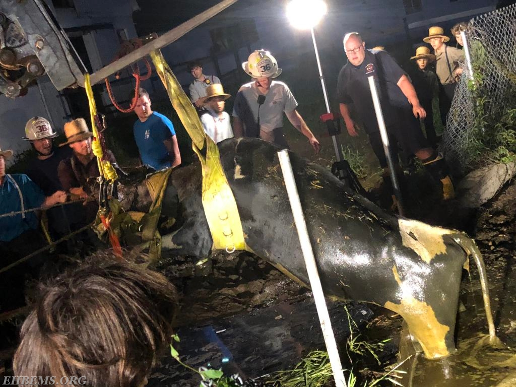 The cow is successfully removed from the pit.